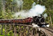 墨尔本帕芬比利蒸汽小火车彩虹小屋一日游 Puffing Billy 体验童真旅行 百年火车穿越原始森林