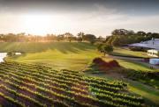 珀斯 天鹅河谷美食美酒一日游(国王公园+西澳葡萄酒产区+蜂蜜农场+野生动物园)