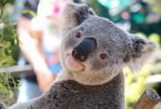 精品小车团 悉尼蓝山+动物园+鲁拉小镇中文一日游(独家深入蜜月桥+三种缆车+可选日落游船)