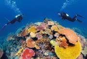 天天出发   凯恩斯 道格拉斯港豪华3日游(全程4星酒店+库兰达热带雨林+豪华银梭号出海大堡礁+丹翠雨林+阿凡达莫斯曼峡谷 明星四哩海滩)