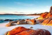 塔斯马尼亚 东海岸深度5日游(皇家植物园+惠灵顿山+亚瑟港+塔斯马尼亚半岛+特色小木屋住宿+夜观企鹅归巢+火焰湾+浪漫薰衣草)